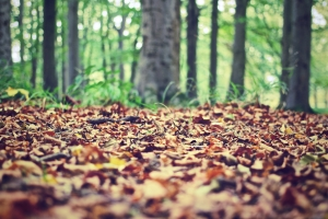 nature-forest-leaves-ground